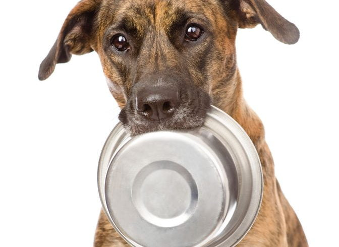 What's on the menu? Why you can feel good about the healthy pet food in your pet's bowl